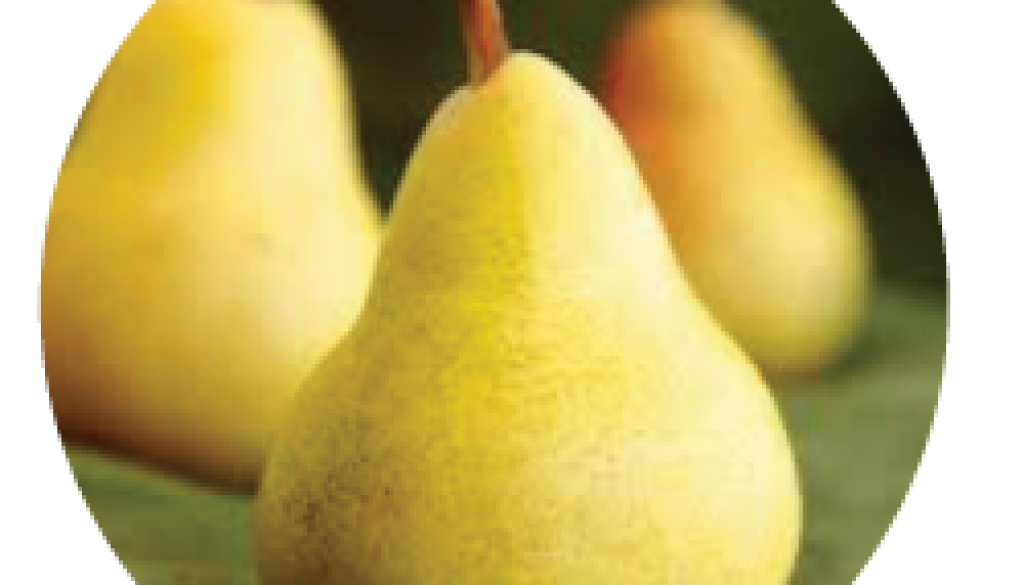 French-Pear